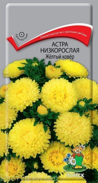 Фото низкорослых цветов желтого цвета