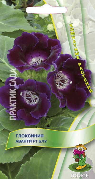 Гипестис Розовая вуаль 10шт  купить семена цветов почтой