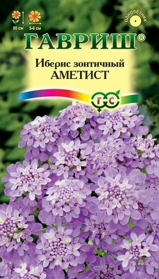 Иберис цветы
