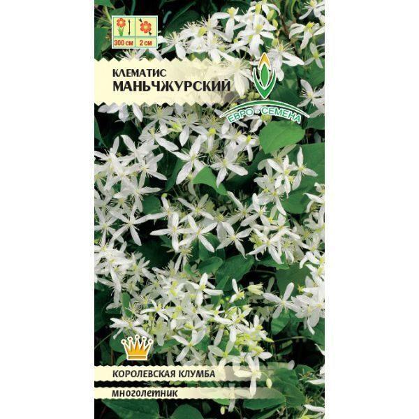 Клематис маньчжурский выращивание из семян отзывы 97