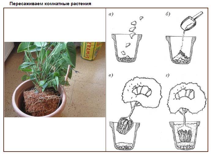 Как сажать комнатные цветы в горшок 153