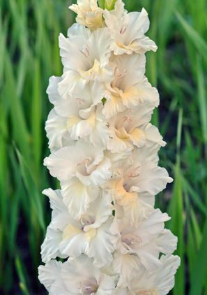 комнатные цветы декабрист фото и уход за ним